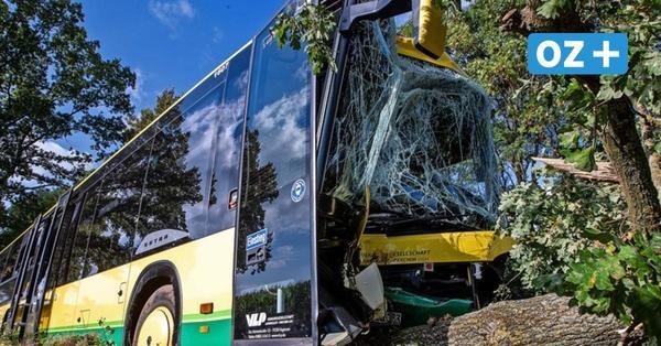Plate: Schulbus kracht gegen Baum – mehrere Kinder verletzt