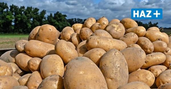 Vorläufige Bilanz: So fällt die Kartoffelernte 2021 in Niedersachsen aus