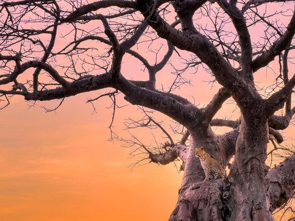 iPhone 13 Pro Camera Review: Tanzania — Austin Mann