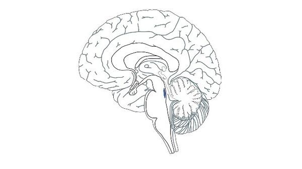 """The Brain's """"Blue Spot"""" May Help Identify Alzheimer's Earlier"""