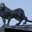 Company behind massive Carolina Panther AR explains why 'this is going to be the future'