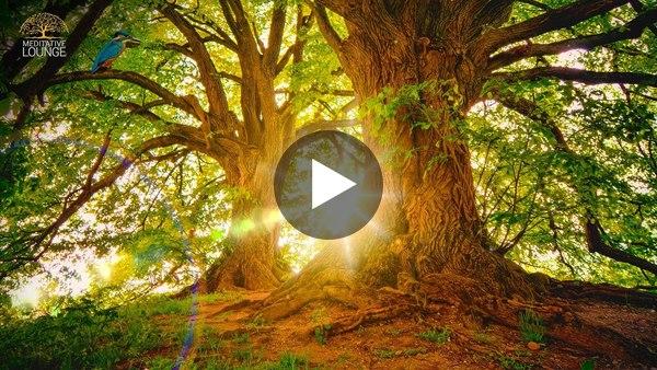 Entspannungsmusik Klavier Natur Waldgeräusche Vögel - 10 Stunden Version