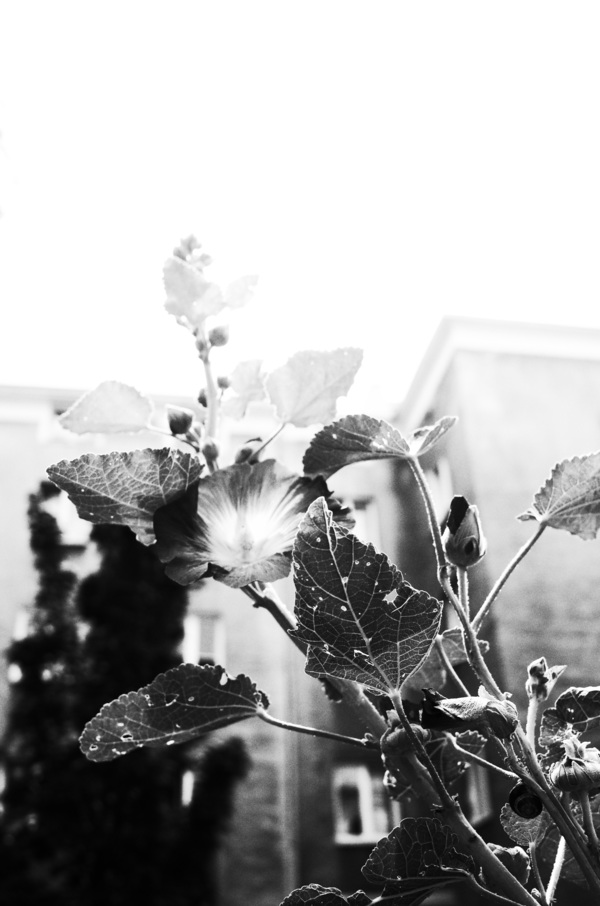 Urban Flowers, 2016