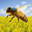 On the trail of bee mortality with energy-autonomous sensors - Fraunhofer IZM