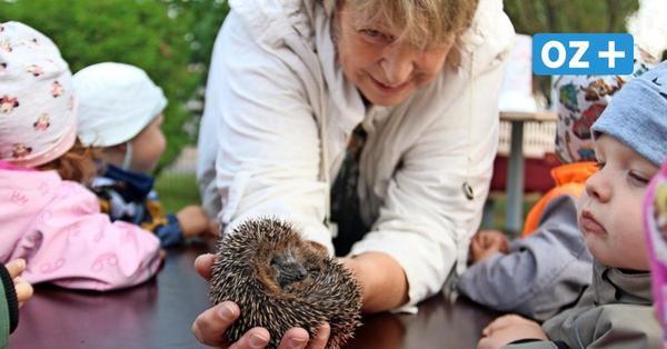Igelfrau verzaubert Kita-Knirpse inStoltenhagen mit süßen Swinegeln