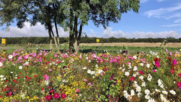 Blütenparadies in Grevesmühlen (Foto: Helmut Kuzina)