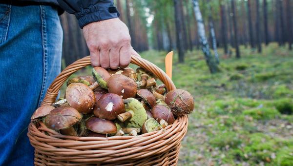 Die Pilz-Saison ist in vollem Gange. (Foto: dpa)