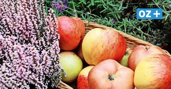 Naturschützer und Kleingärtner laden zum Apfelfest mit Livemusik und Tombola