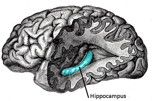 Hippocampus Is the Brain's Storyteller