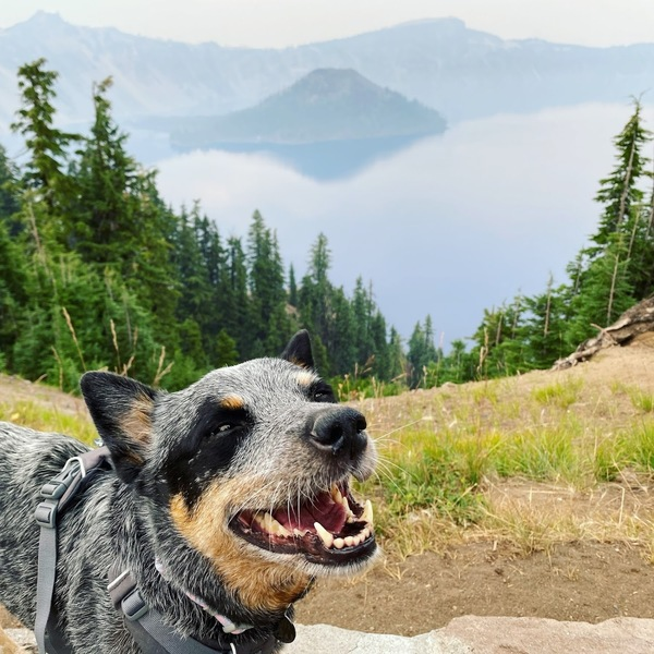 Milli loves Crater Lake, even when it is hazy