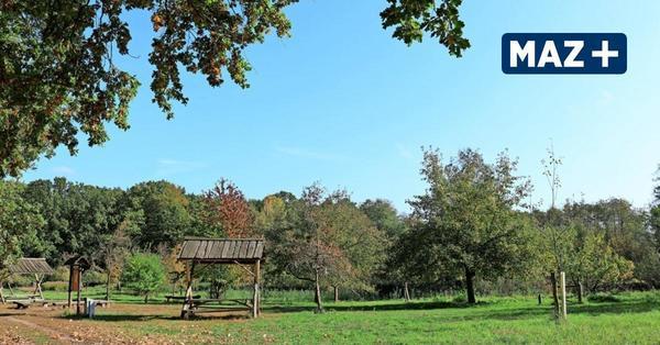 Königs Wusterhausen: Hier gibt es schöne Plätze zum Drachensteigen lassen