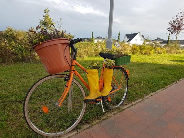 Blumenfahrrad in Bad Doberan (Foto: A. Levien)