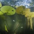Hidden Mangrove Forest in the Yucatan Peninsula Reveals Ancient Sea Levels
