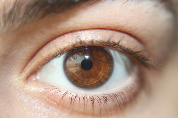 Pupil Size May Be Linked to Intelligence   Discover Magazine