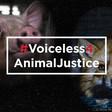 Join #Voiceless4AnimalJustice | Animal Justice