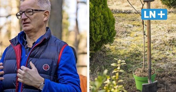 Hansestadt zahlt bis zu 150 Euro für einen neugepflanzten Baum in privaten Gärten
