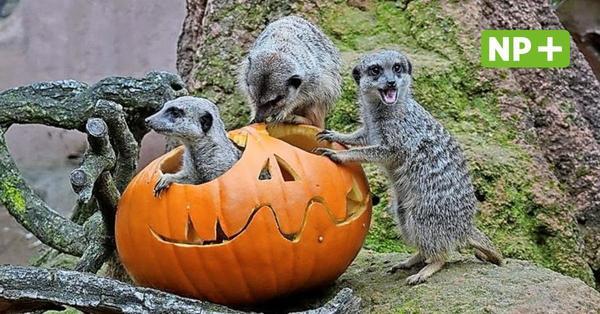 Ausflüge in den Herbstferien: Tolle Tierparks in und um Hannover