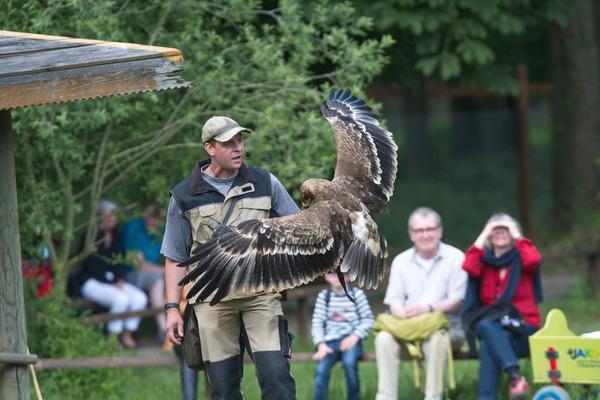 Auf dem Falkenhof finden täglich zweimal Greifvogelvorführungen statt. (Foto: Thomas Hennig)