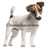 Newsletter de Chien a Donner