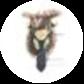 moose 🦌