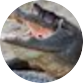 Gators Daily 🐊