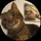 Lola The 3-Legged Cat
