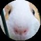 [Restricted] Animal