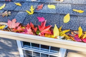 leaves on roof