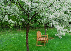 bench under flowering tree