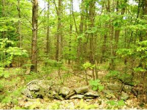 Photo of L11 Province Barnstead NH 03218
