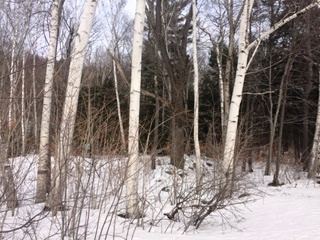 Photo of Forest Ridge & Kancamagus Highway Lincoln NH 03251