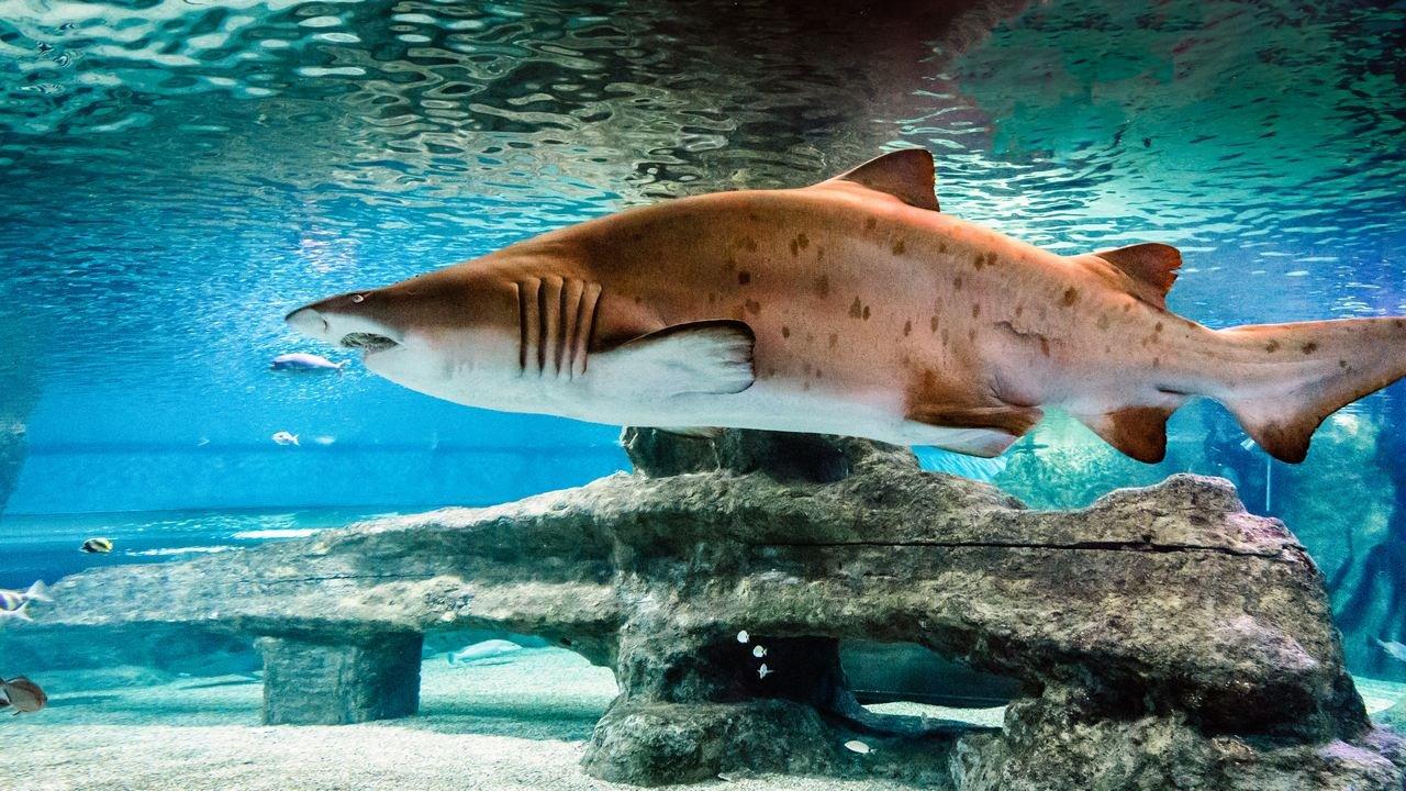 Aquarium Costa Almería - Parque Temático