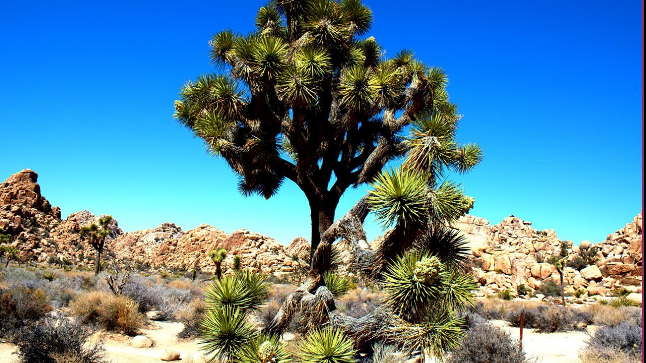 Joshua Tree National Park Tours From Palm Springs