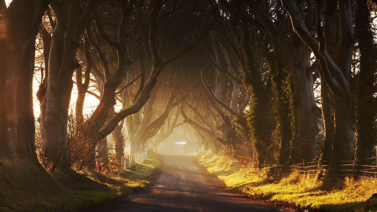 Dark Hedges - Game of Thrones Film Locations Tour