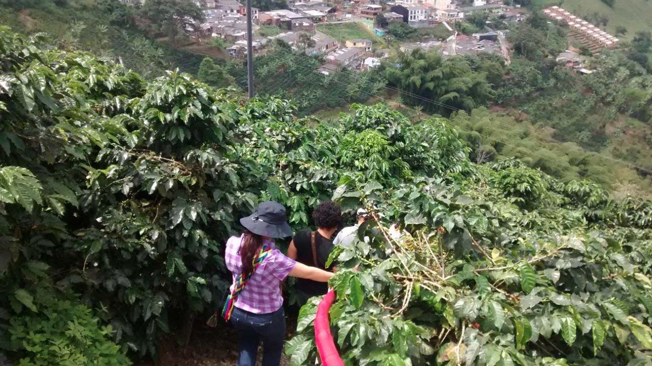 Ejeturistico Com Coffee Tasting Tour In Buenavista And Pijao