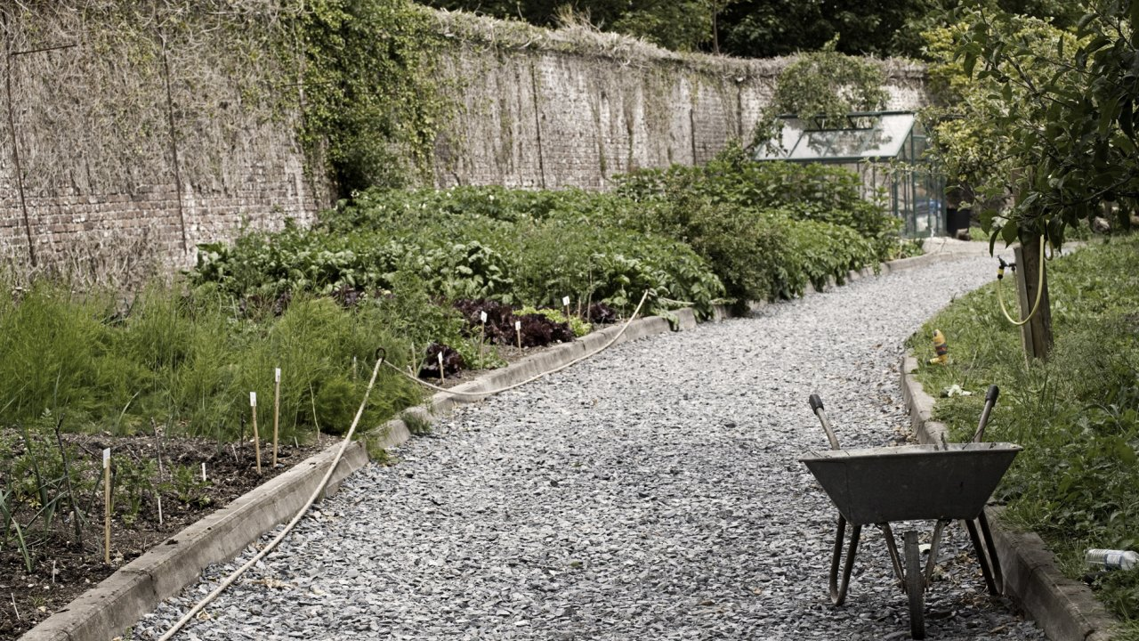 Walk & Talk with Killruddery Head Gardener Daragh Farren @ Killruddery House and Gardens
