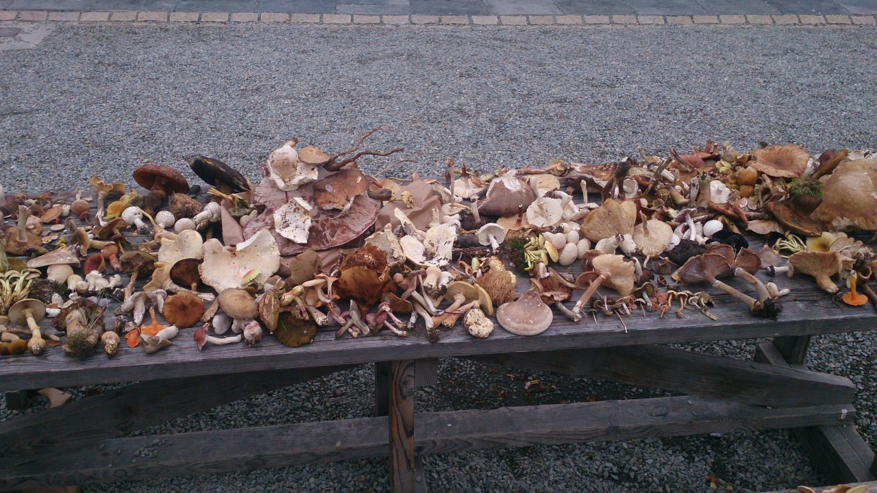 Mushroom Hunting with Bill O'Dea @ Killruddery House & Gardens