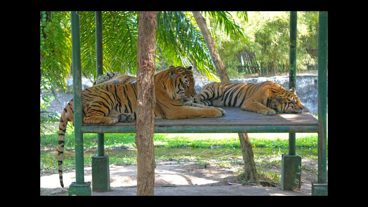 Truly Asia Tour Bali Safari And Marine Park Ticket Only Night Package Choose A Date