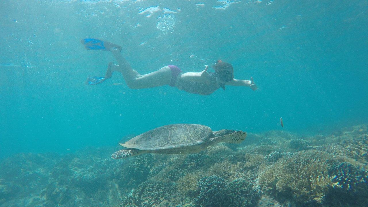 Turtle Wandering