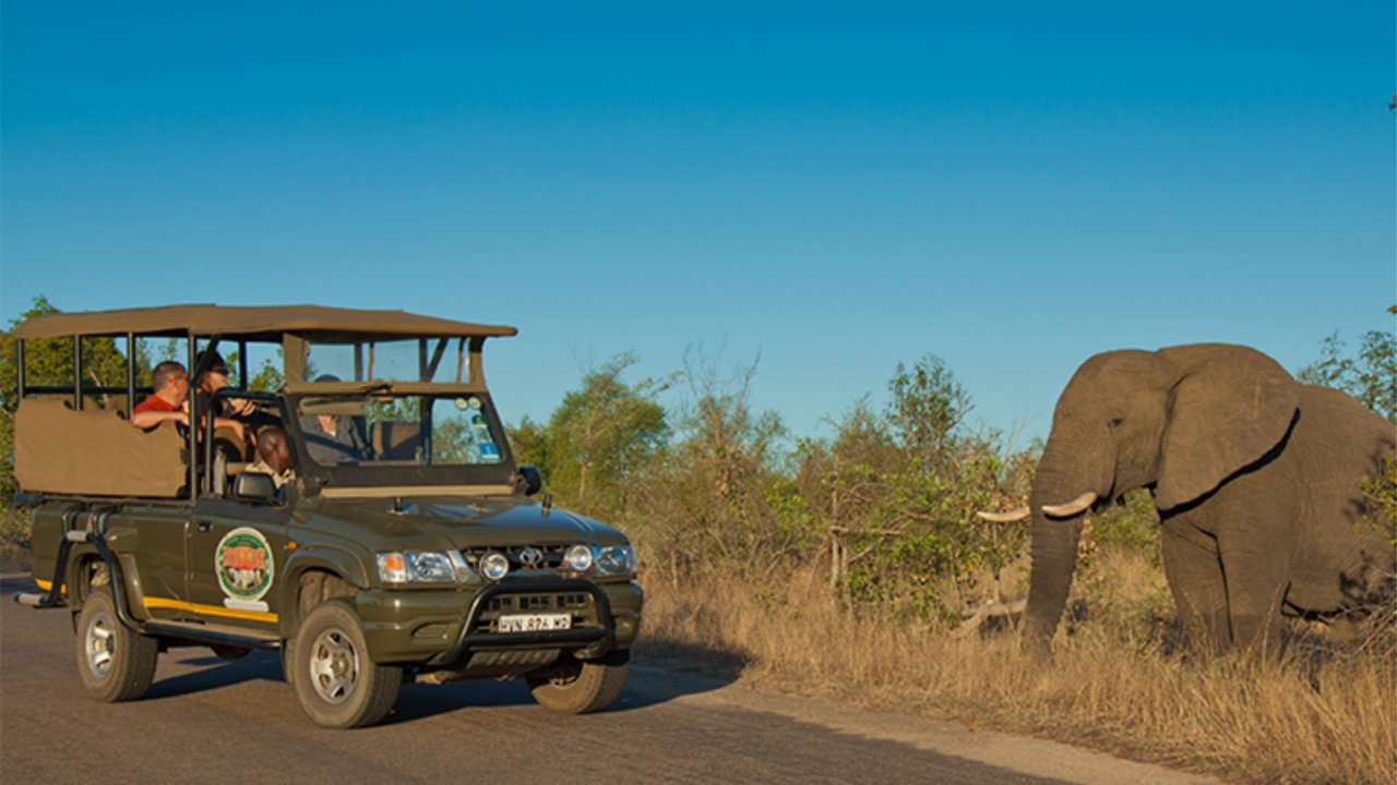 Guided Safari Game Drives