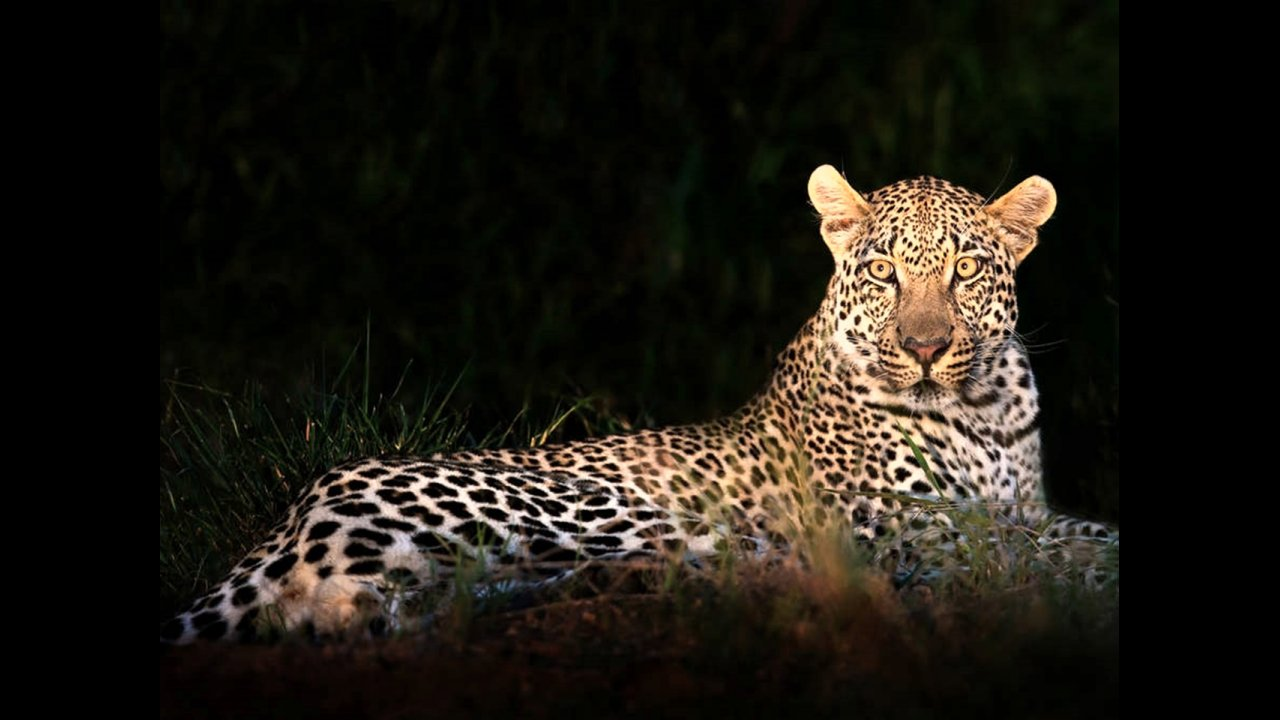 Leopard at Kruger National Park