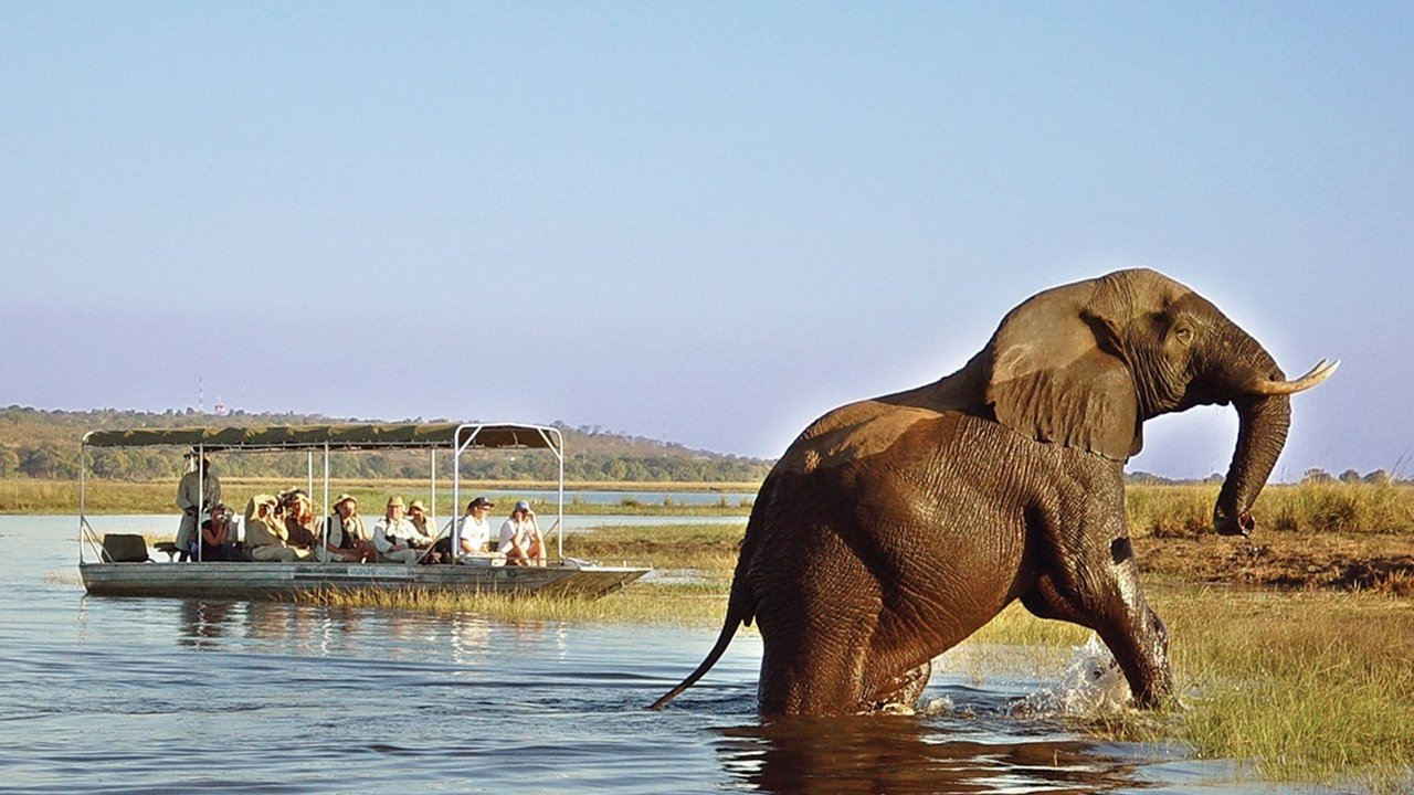 Elephant at Chobe National Park