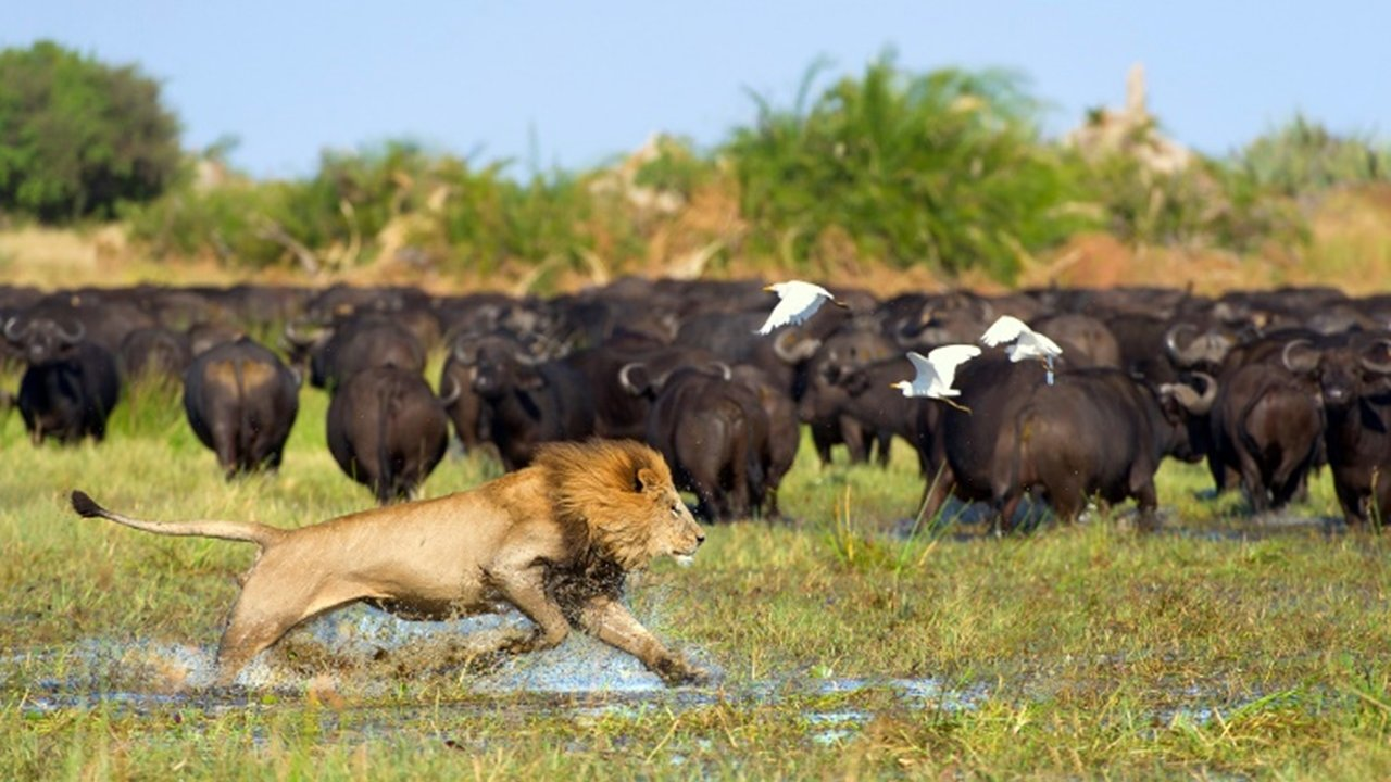 Wildlife in the Okavango Delta