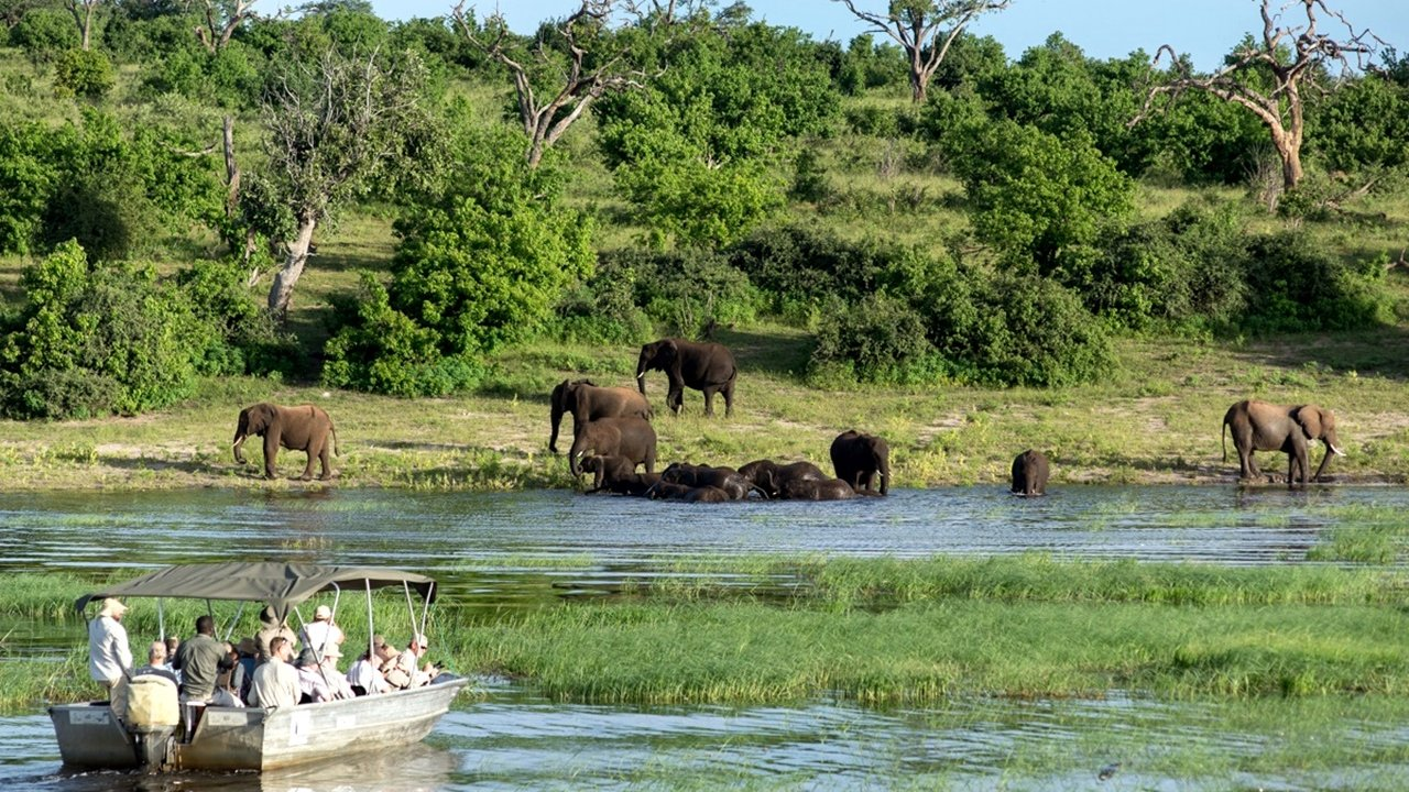 Game Boat Cruise in Chobe River