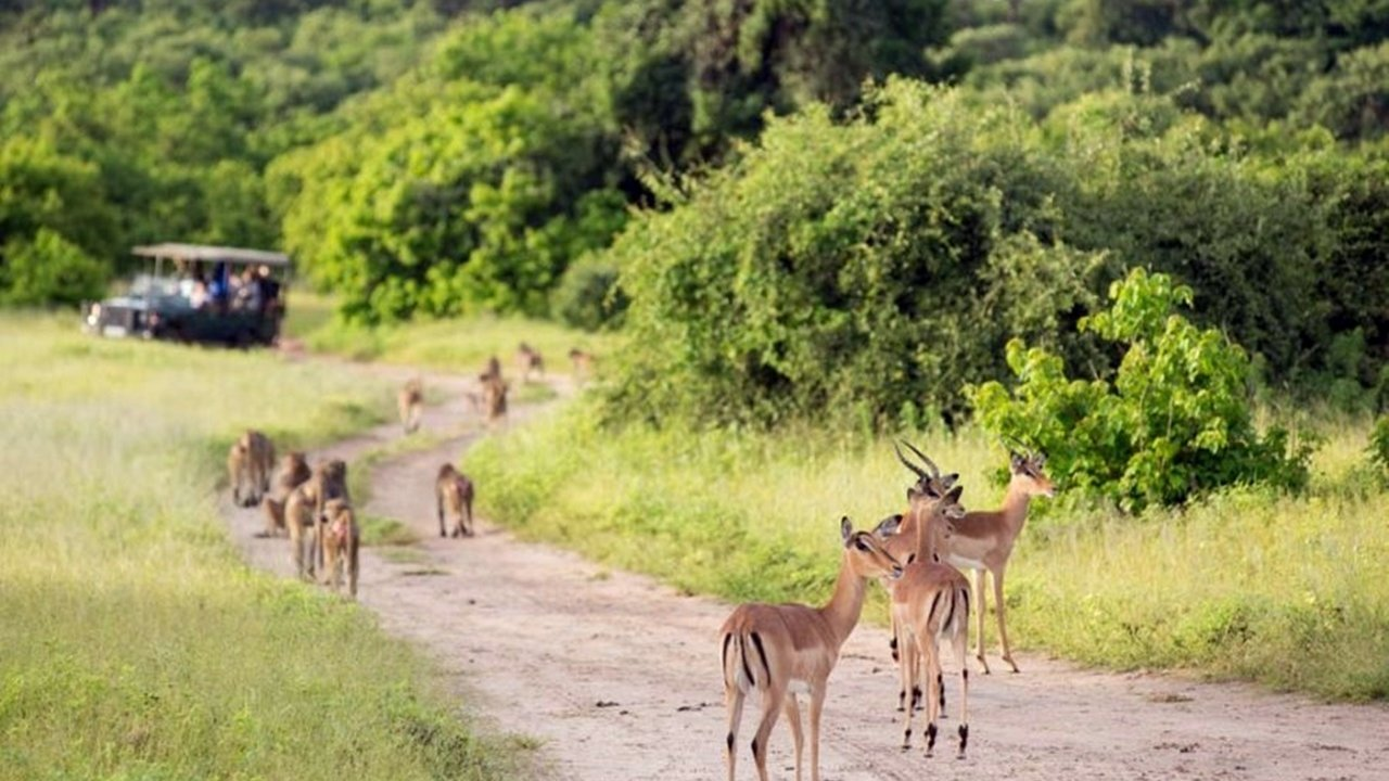 Gazelle and Monkeys in Hwange-National-Park