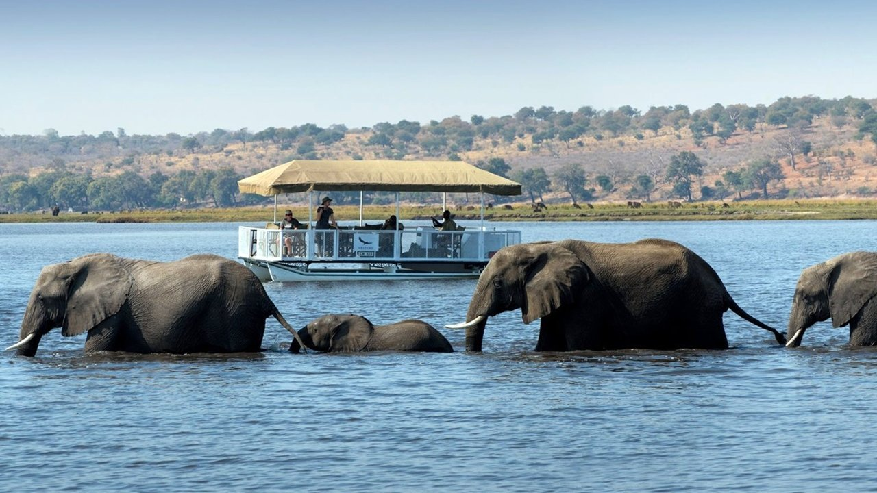Elephant Safari in the Okavango Delta
