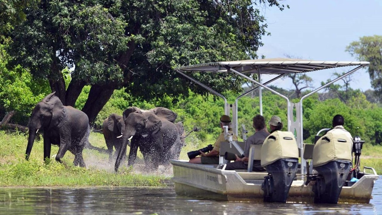 Elephants sighting in Chobe National Park on boat cruise