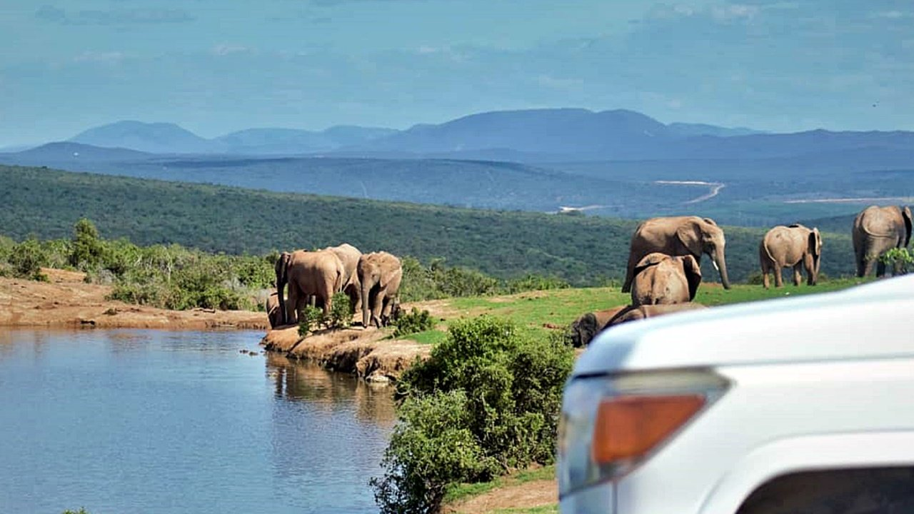Game Drive at Addo Elephant National Park