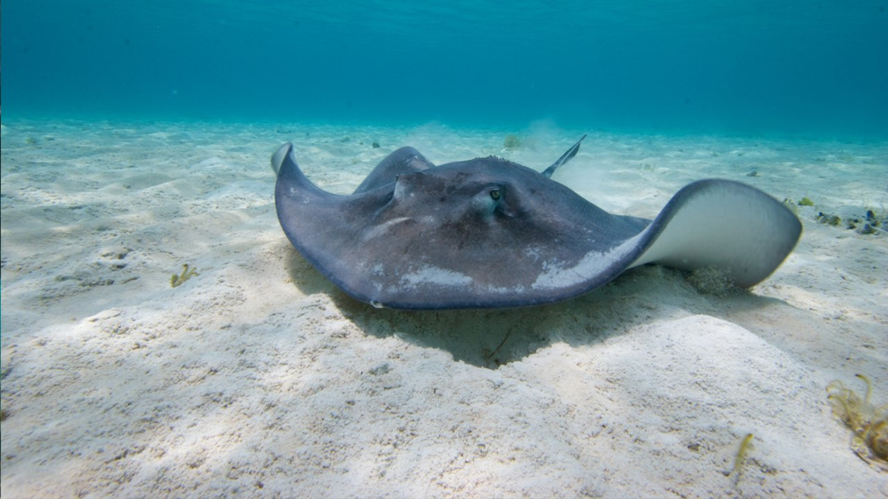 Home to Stingrays and many creatures!