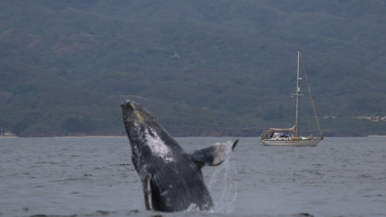 Whale Watching Puerto Vallarta Eco Explorer